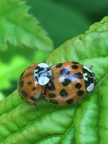 ladybug 2019